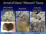 arrival of classic paleozoic fauna