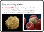 elementos figurados1