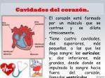 cavidades del coraz n