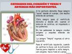 cavidades del coraz n y venas y arterias m s importantes
