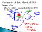 formation of two identical dna molecules