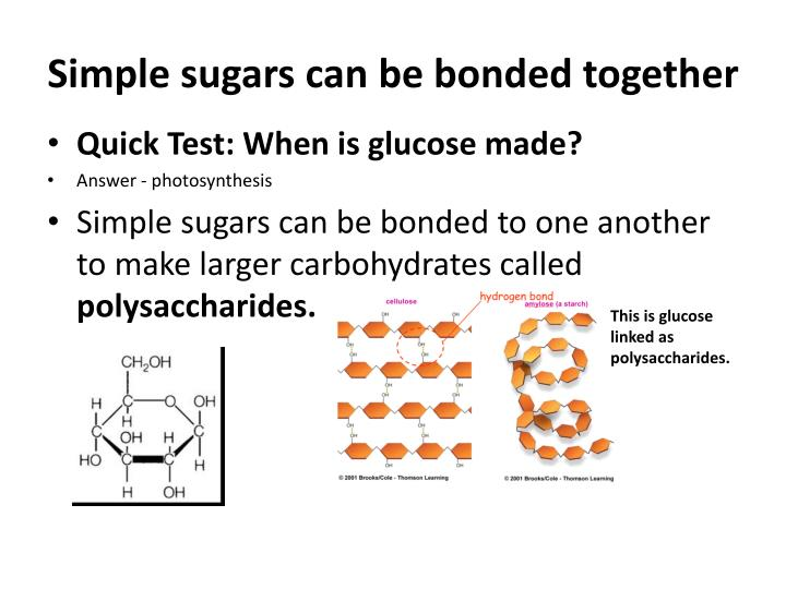Simple sugars can be bonded together