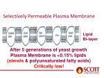 selectively permeable plasma membrane