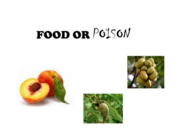 food or poison n.