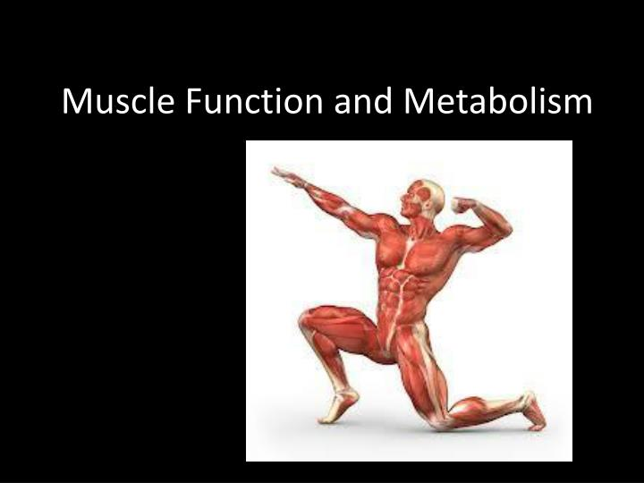 muscle function and metabolism n.