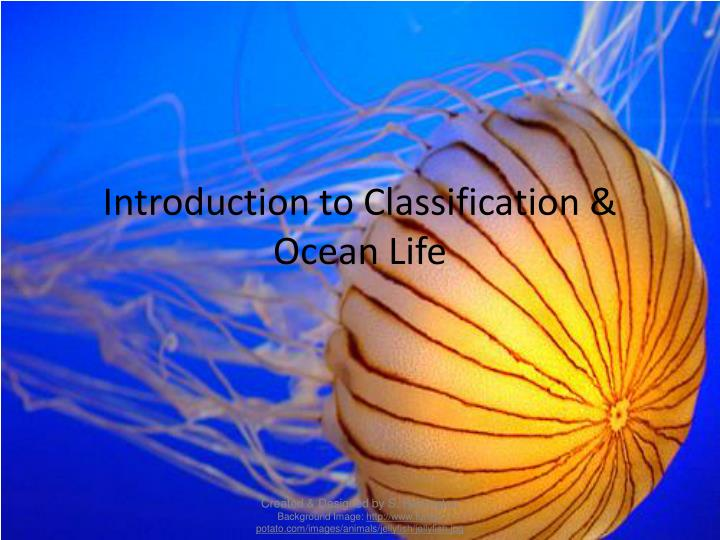 introduction to classification ocean life n.