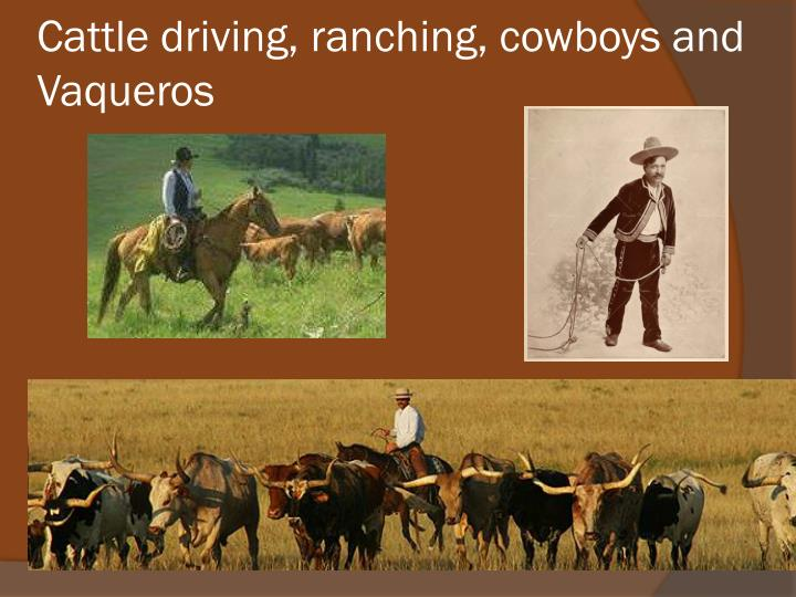Cattle driving, ranching, cowboys and Vaqueros
