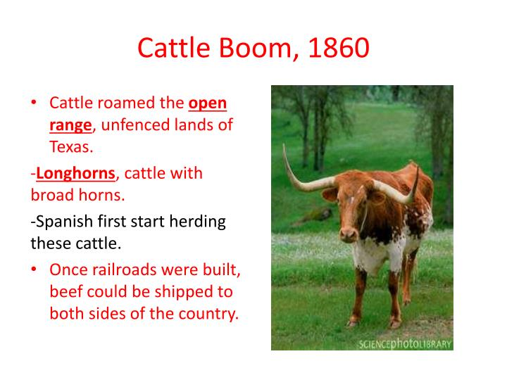 Cattle boom 1860