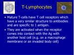t lymphocytes