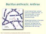 bacillus anthracis anthrax