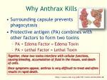 why anthrax kills