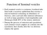 function of seminal vesicles