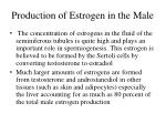 production of estrogen in the male