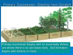 primary succession starting from scratch