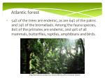 atlantic forest1