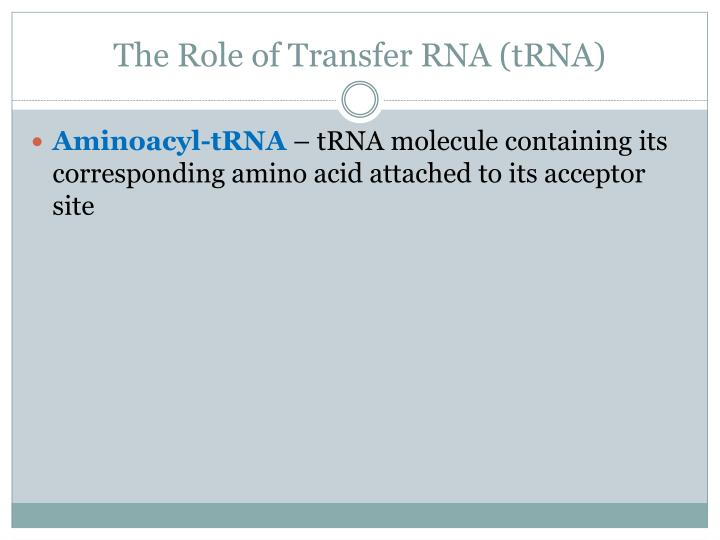 The Role of Transfer RNA (
