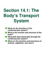section 14 1 the body s transport system