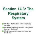 section 14 3 the respiratory system
