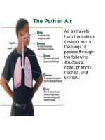the path of air1