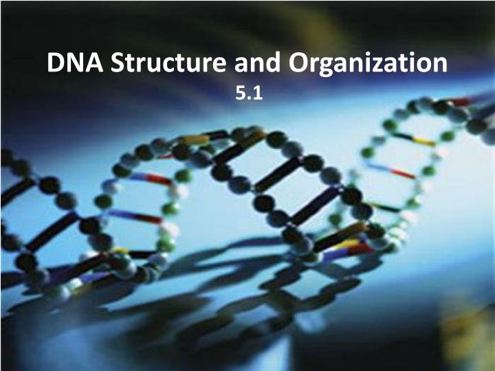 dna structure and organization n.