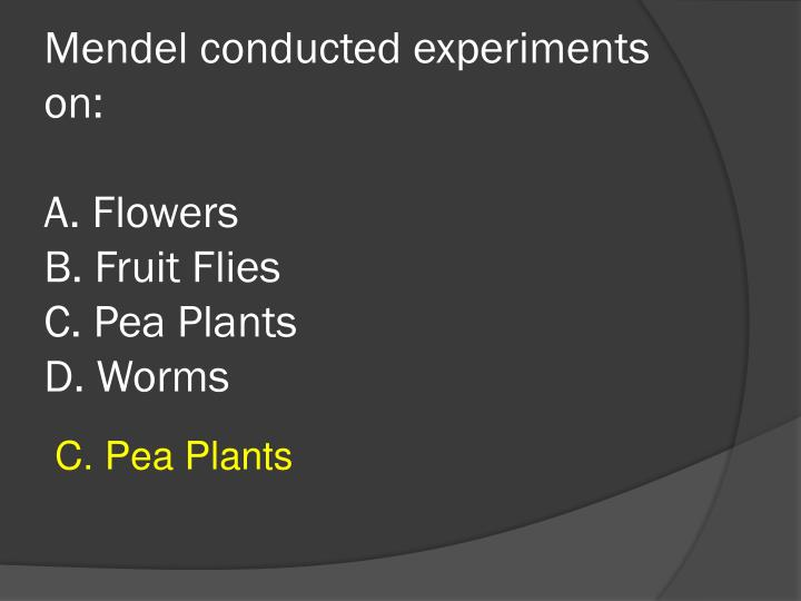 Mendel conducted experiments on a flowers b fruit flies c pea plants d worms