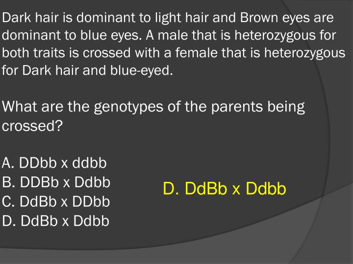 Dark hair is dominant to light hair and Brown eyes are dominant to blue eyes. A male that is heterozygous for both traits is crossed with a female that is heterozygous for Dark hair and blue-eyed.