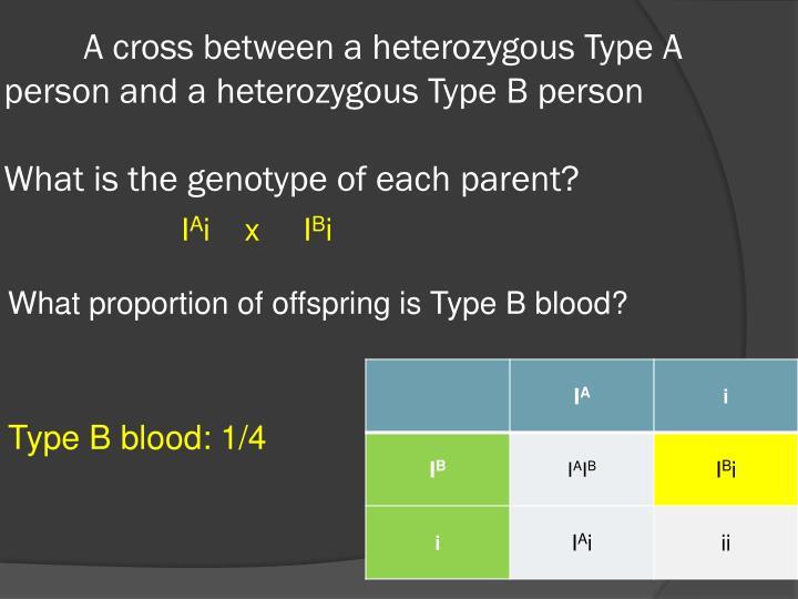 A cross between a heterozygous Type A person and a heterozygous Type B person