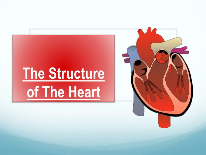 Ppt The Structure Of The Heart Powerpoint Presentation Id2254568