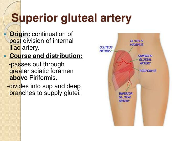 Structure The superior rectal artery is the continuation of the inferior mesenteric artery It descends into the pelvis between the layers of the mesentery of the