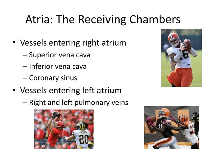 Atria: The Receiving Chambers