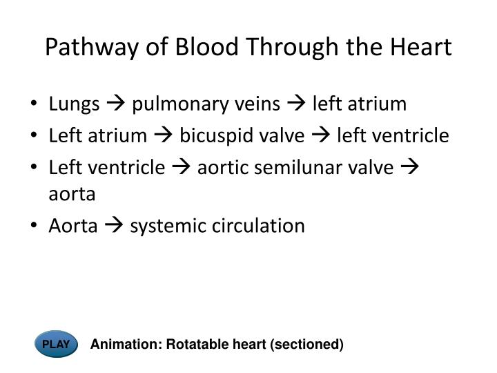 Pathway of Blood Through the Heart
