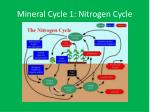 mineral cycle 1 nitrogen cycle