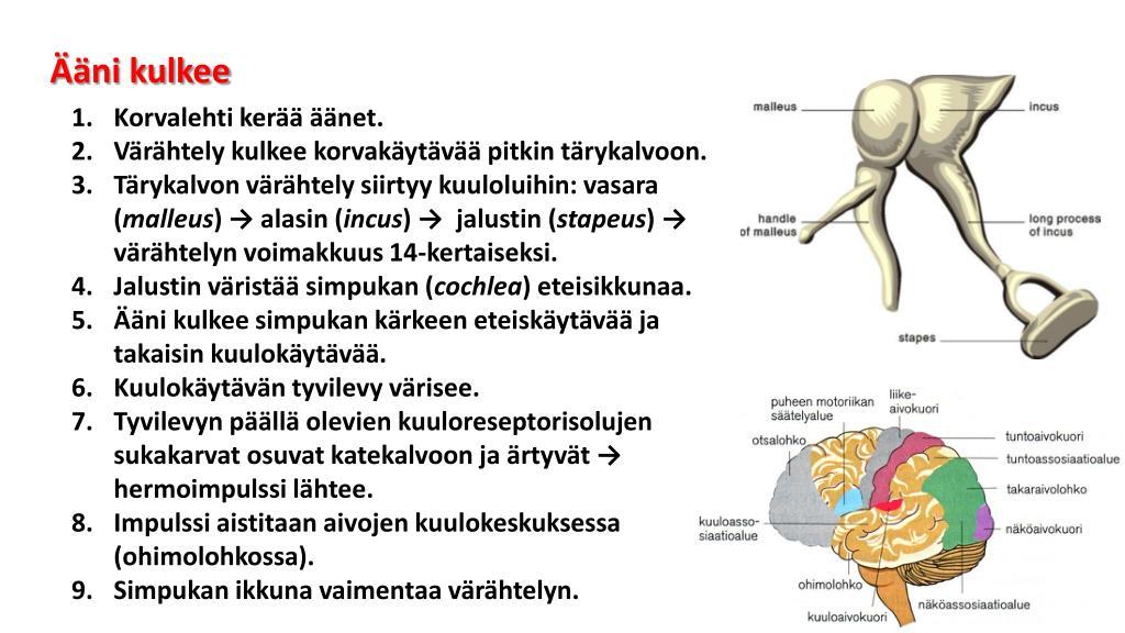 Hermoimpulssi