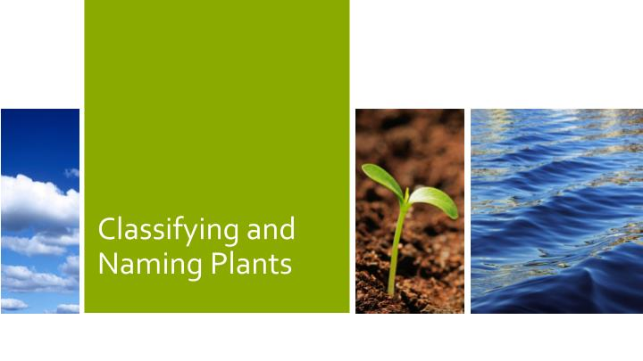 classifying and naming plants n.
