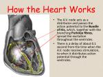 how the heart works2