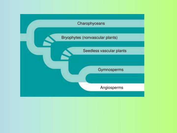 Charophyceans