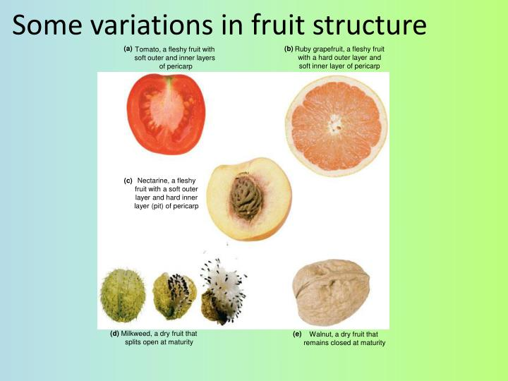 Some variations in fruit structure