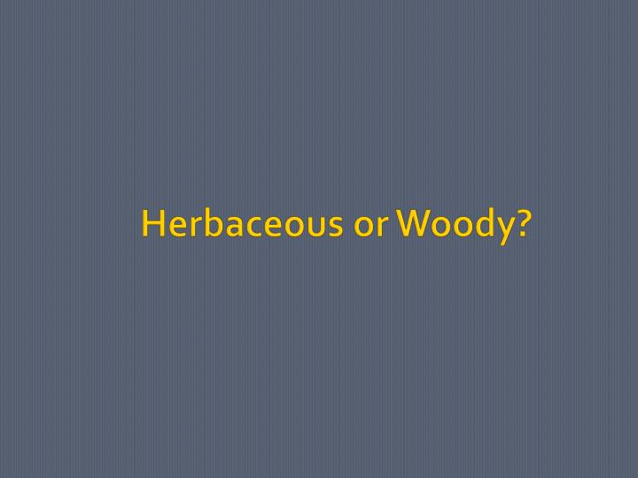 Herbaceous or Woody?