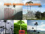 rbol nacional de colombia