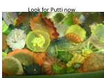 look for putti now