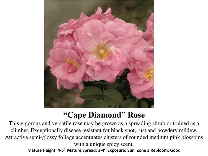"""Cape Diamond"""