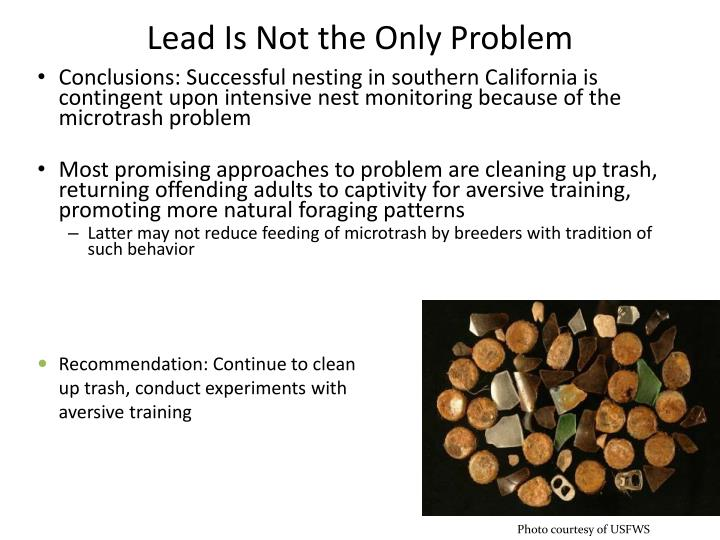 Lead Is Not the Only Problem