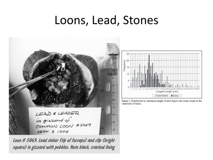 Loons, Lead, Stones