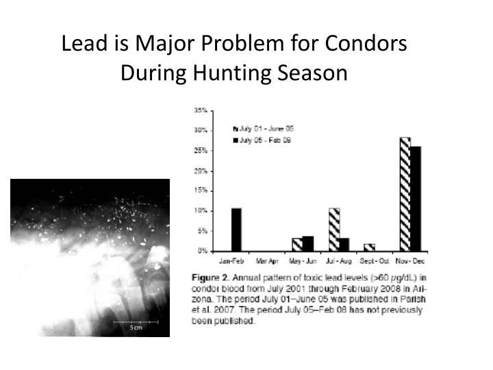 Lead is Major Problem for Condors