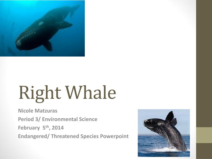 the concerns and threats to right whale communities Community resilience garfo noaa fisheries recommends actions to help right whales two of the largest human-caused threats to right whales.