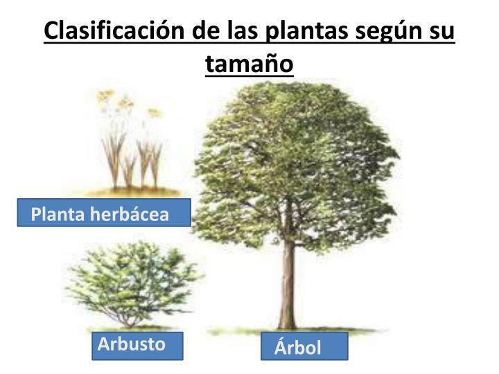 Ppt cuidemos las plantas powerpoint presentation id for Clasificacion de las plantas ornamentales