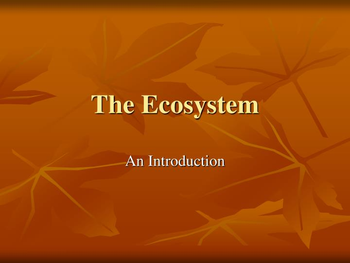 the ecosystem n.