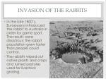 invasion of the rabbits