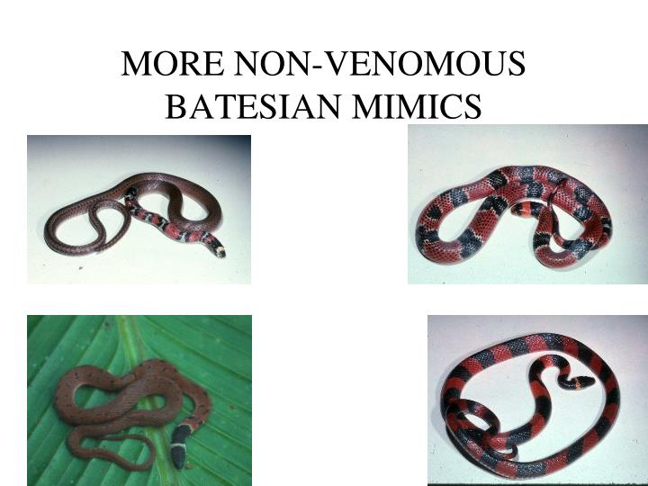 MORE NON-VENOMOUS BATESIAN MIMICS