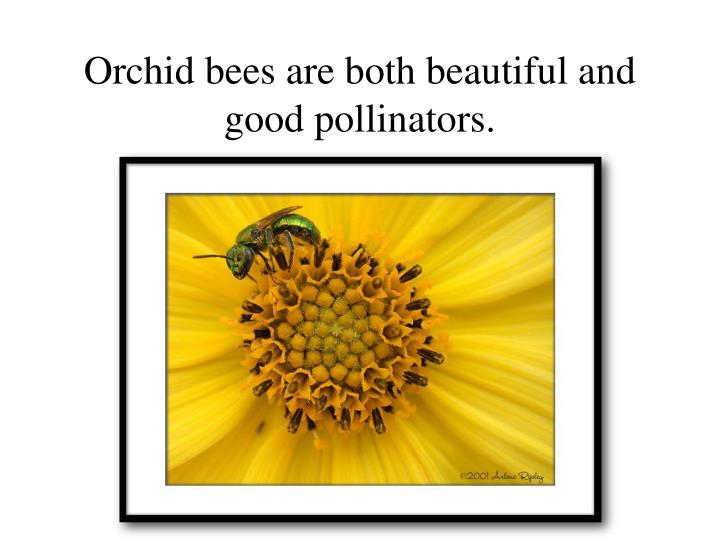 Orchid bees are both beautiful and good pollinators